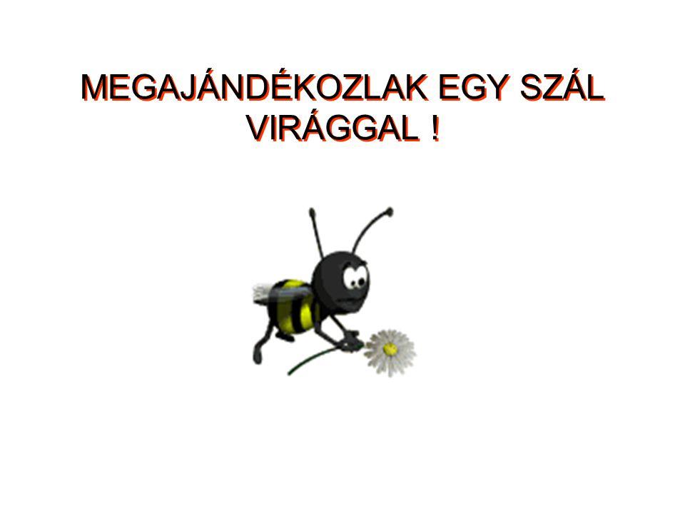 MEGAJÁNDÉKOZLAK EGY SZÁL VIRÁGGAL !