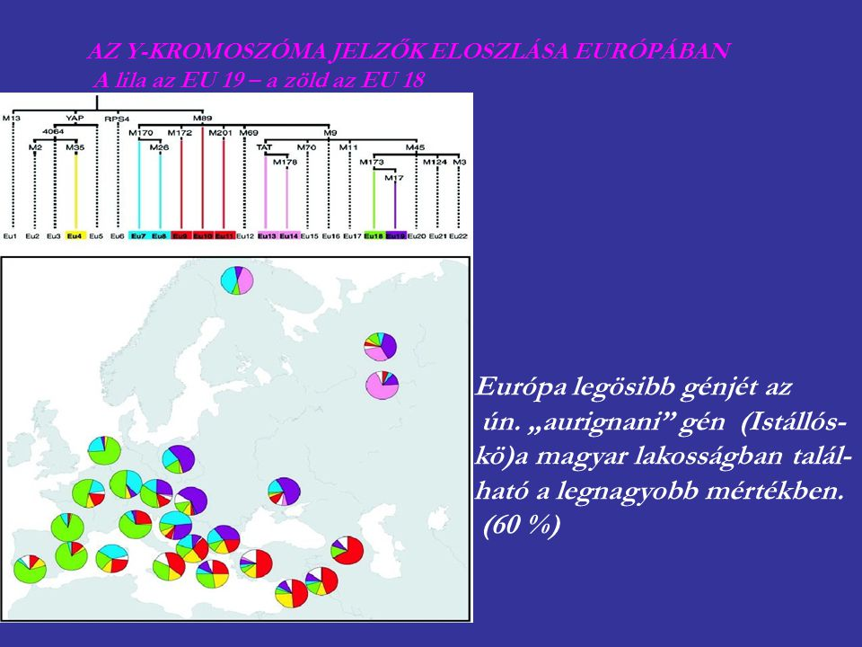 "Európa legösibb génjét az ún. ""aurignani gén (Istállós-"