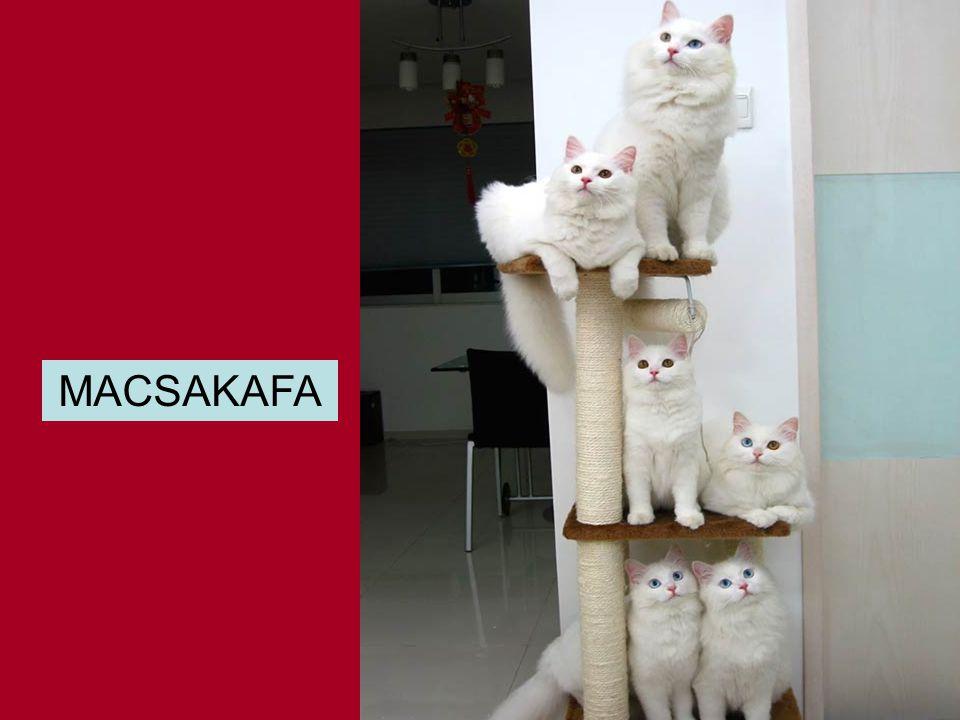 MACSAKAFA