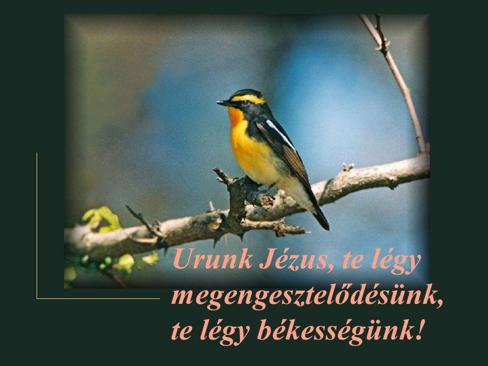 Urunk Jézus, te légy megengesztelődésünk,