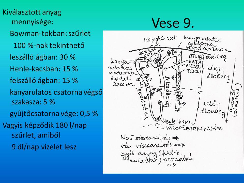 Kiválasztott anyag mennyisége: Bowman-tokban: szűrlet 100 %-nak tekinthető leszálló ágban: 30 % Henle-kacsban: 15 % felszálló ágban: 15 % kanyarulatos csatorna végső szakasza: 5 % gyűjtőcsatorna vége: 0,5 % Vagyis képződik 180 l/nap szűrlet, amiből 9 dl/nap vizelet lesz