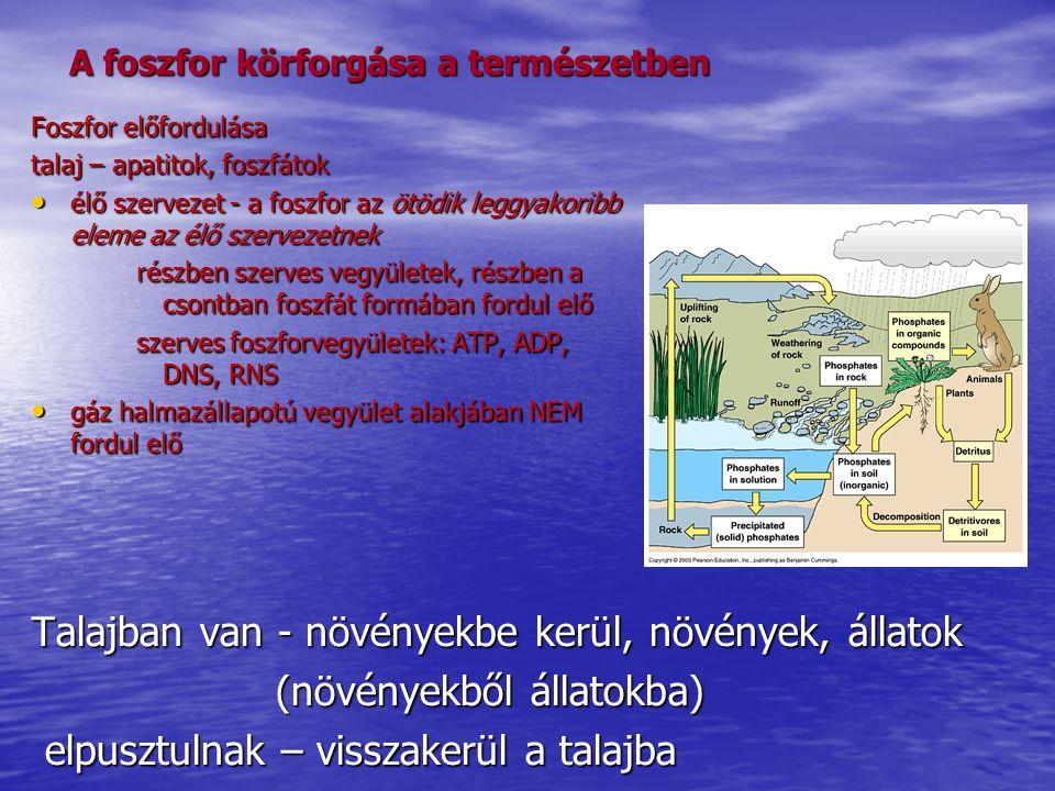 A foszfor körforgása a természetben