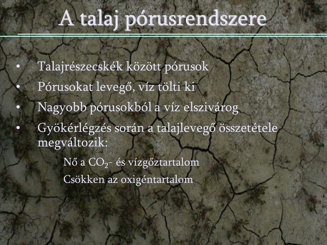 A talaj pórusrendszere