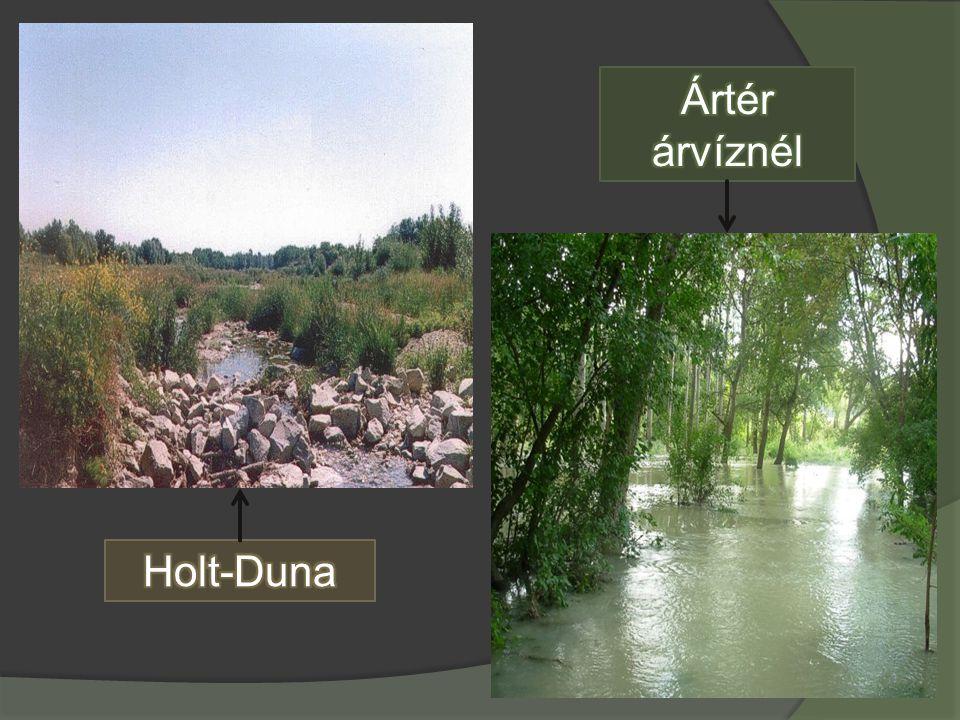 Ártér árvíznél Holt-Duna