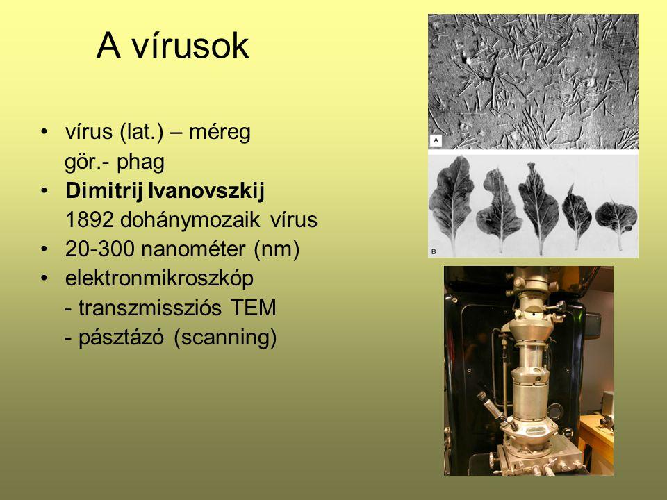 A vírusok vírus (lat.) – méreg gör.- phag Dimitrij Ivanovszkij