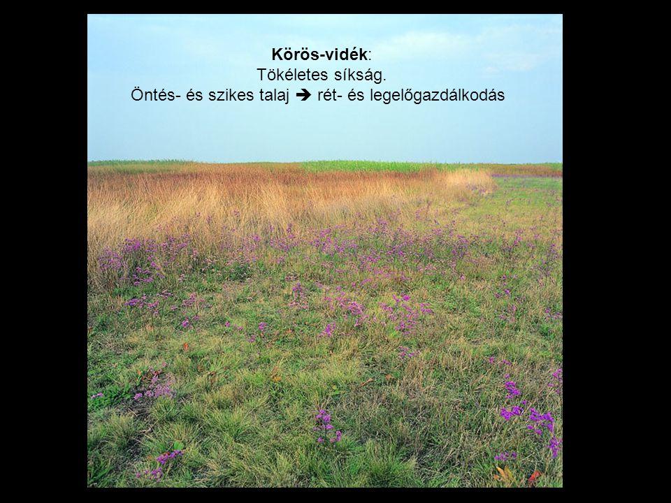 Öntés- és szikes talaj  rét- és legelőgazdálkodás