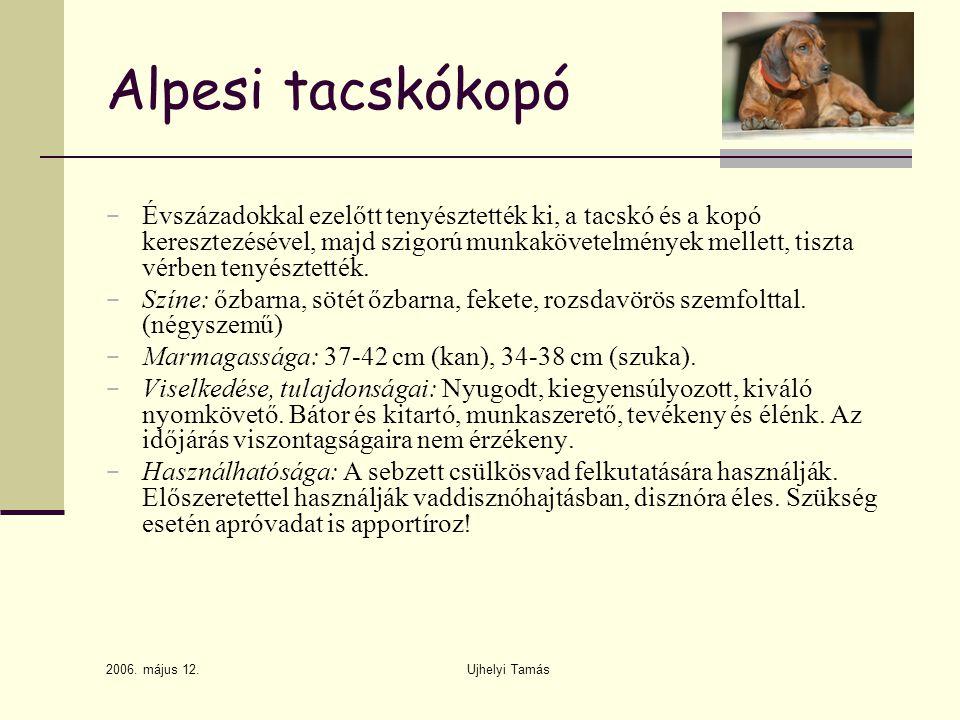 Alpesi tacskókopó