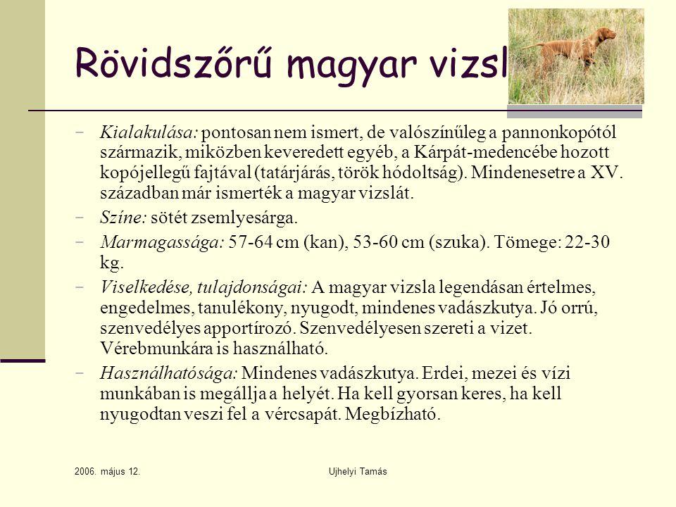 Rövidszőrű magyar vizsla