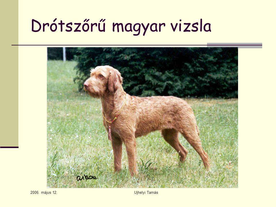 Drótszőrű magyar vizsla