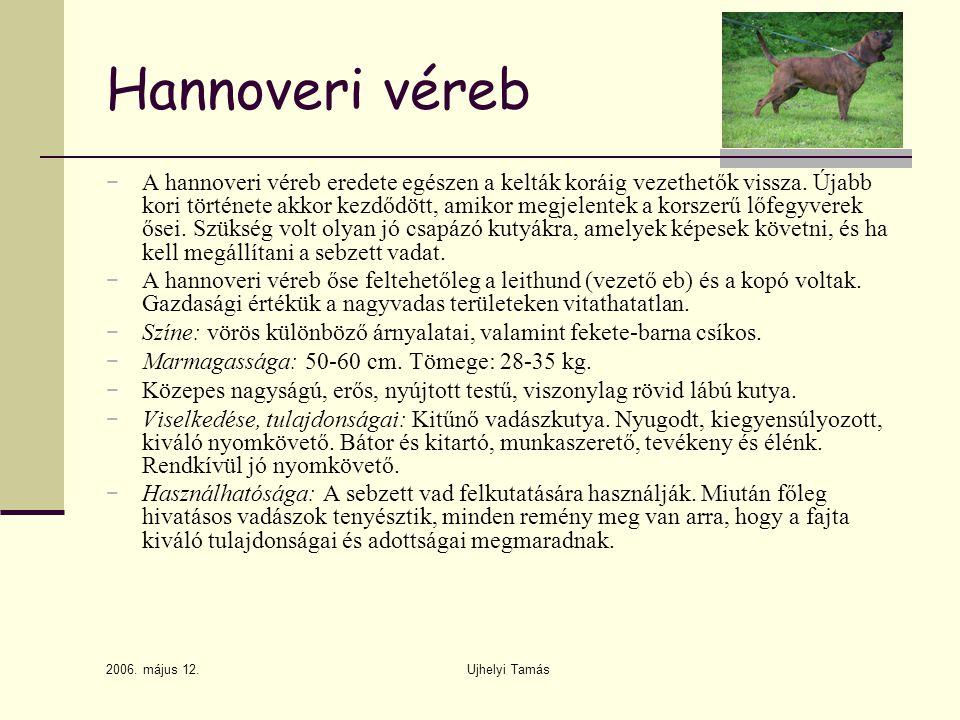 Hannoveri véreb