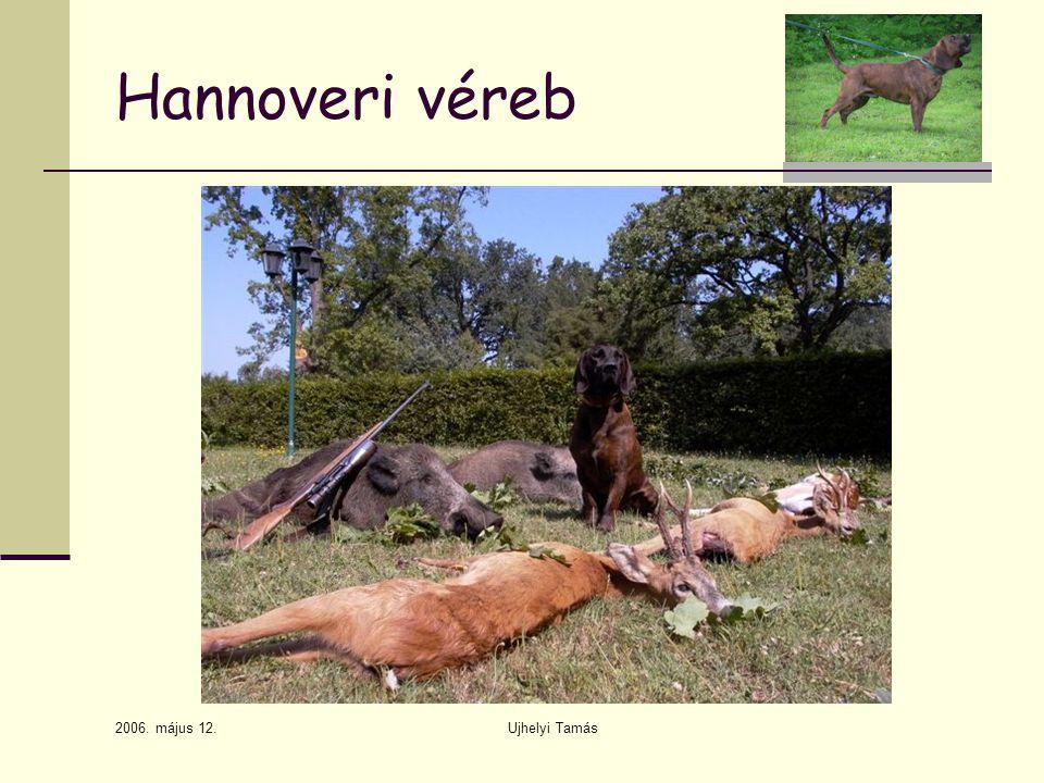 Hannoveri véreb 2006. május 12. Ujhelyi Tamás