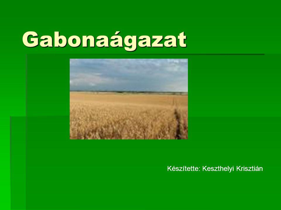 Gabonaágazat Készítette: Keszthelyi Krisztián
