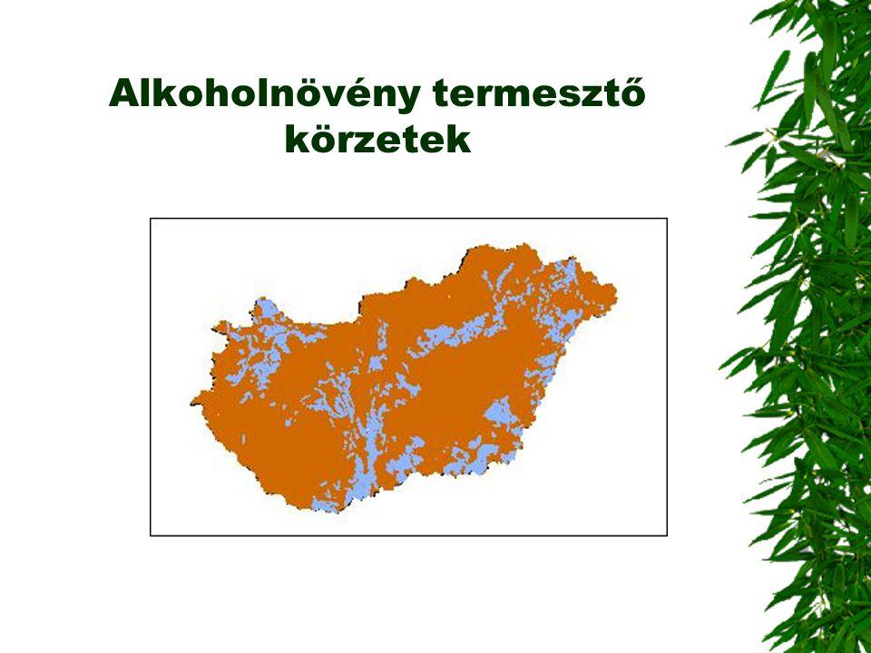Alkoholnövény termesztő körzetek