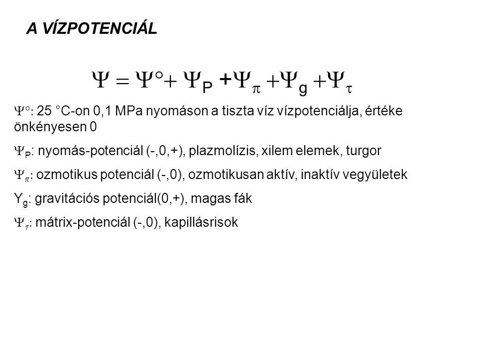 Y = Y+ YP +Yp +Yg +Yt A VÍZPOTENCIÁL