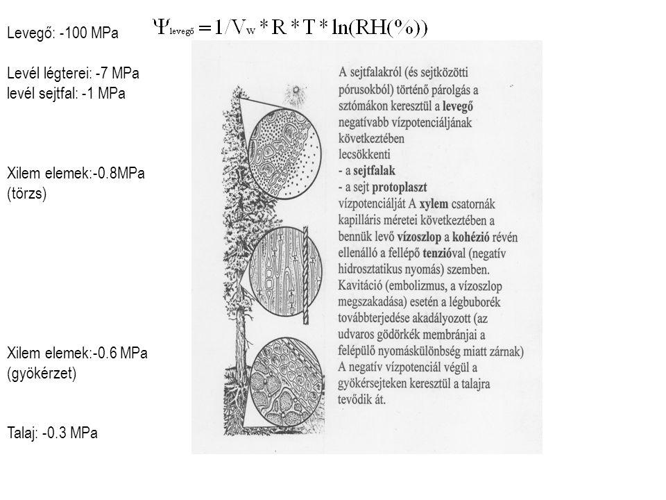 Levegő: -100 MPa Levél légterei: -7 MPa. levél sejtfal: -1 MPa. Xilem elemek:-0.8MPa. (törzs) Xilem elemek:-0.6 MPa.