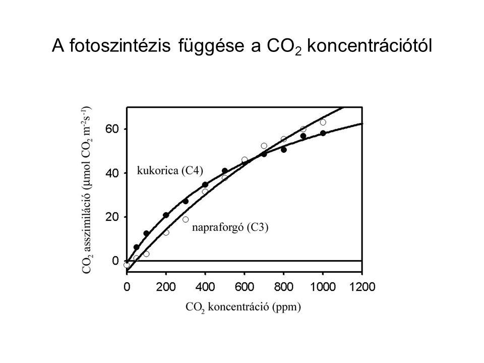 A fotoszintézis függése a CO2 koncentrációtól