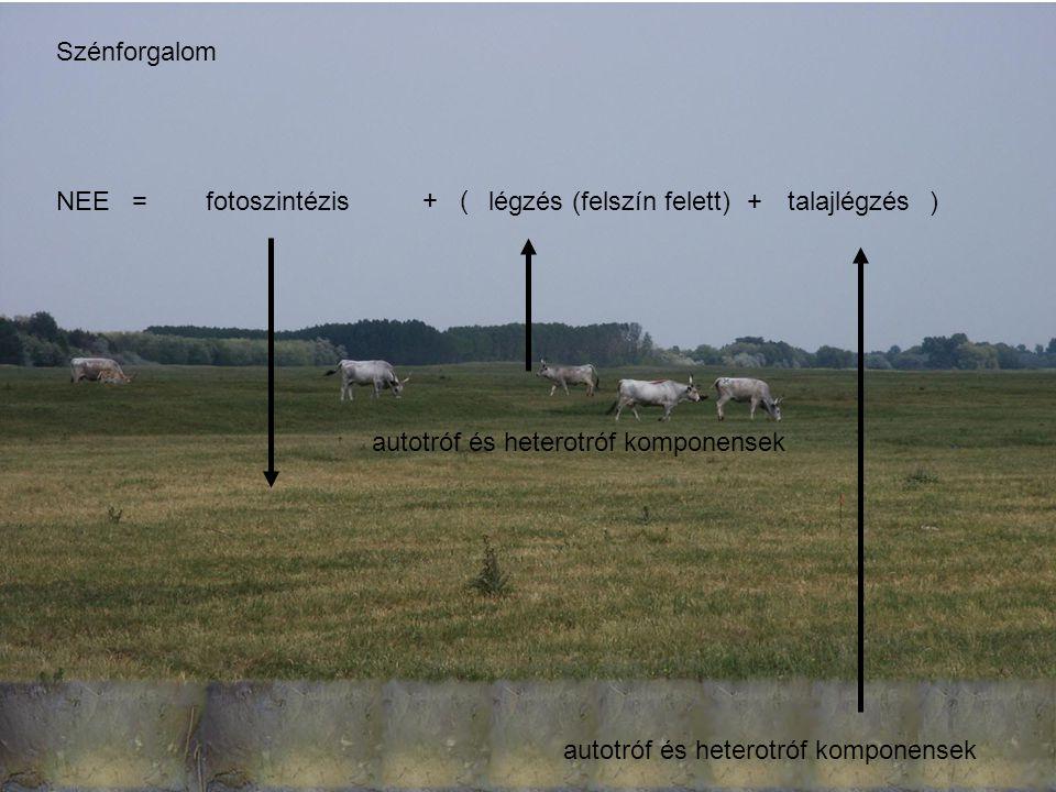 Szénforgalom NEE = + ( + ) fotoszintézis. légzés. autotróf és heterotróf komponensek. talajlégzés.