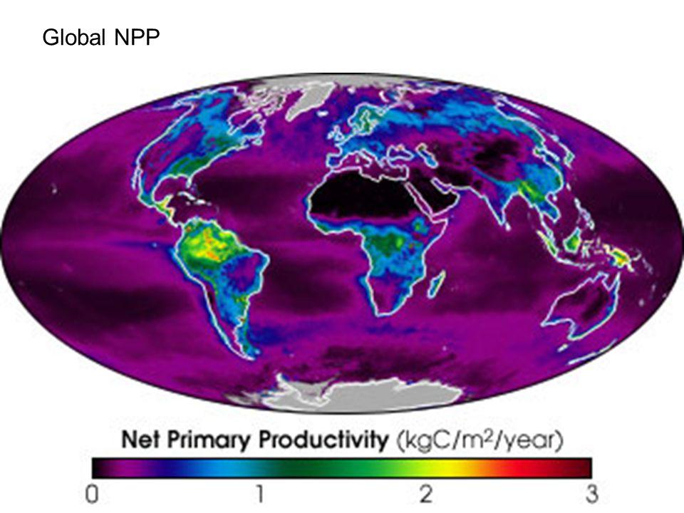 Global NPP