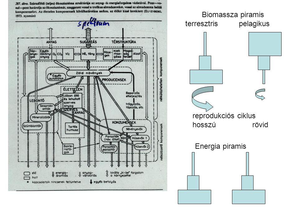 Biomassza piramis terresztris pelagikus reprodukciós ciklus hosszú rövid Energia piramis