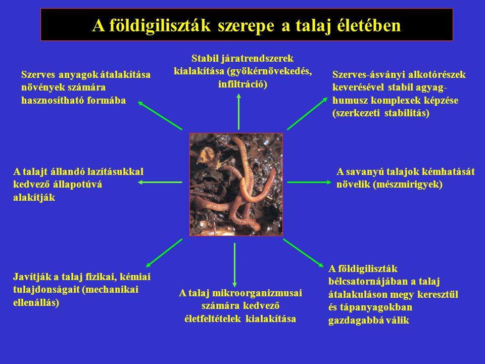 A földigiliszták szerepe a talaj életében
