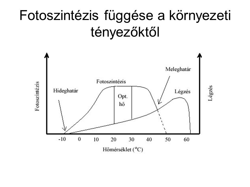 Fotoszintézis függése a környezeti tényezőktől