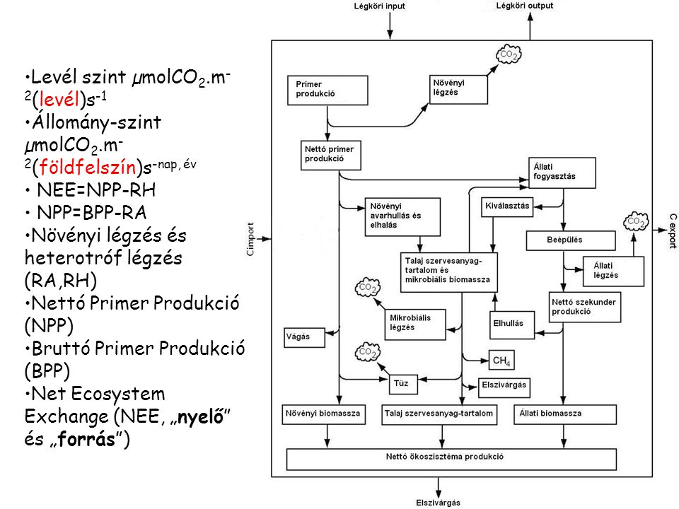 Levél szint µmolCO2.m-2(levél)s-1