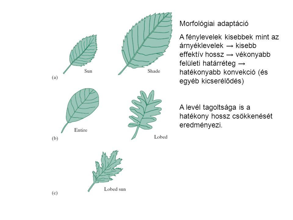 Morfológiai adaptáció