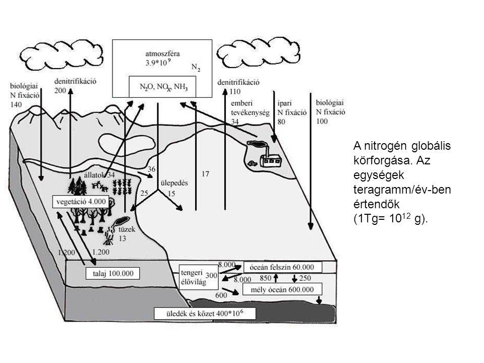 A nitrogén globális körforgása. Az egységek teragramm/év-ben értendők