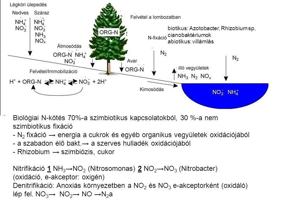 Biológiai N-kötés 70%-a szimbiotikus kapcsolatokból, 30 %-a nem