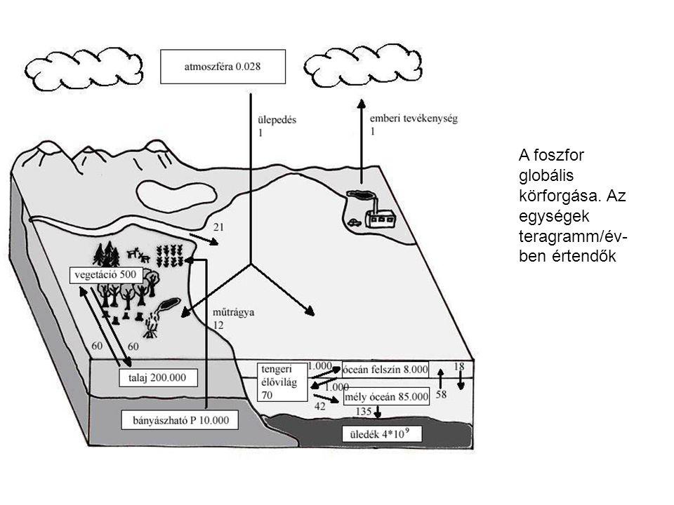 A foszfor globális körforgása. Az egységek teragramm/év-ben értendők