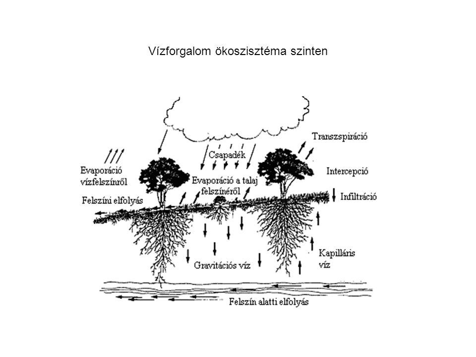 Vízforgalom ökoszisztéma szinten