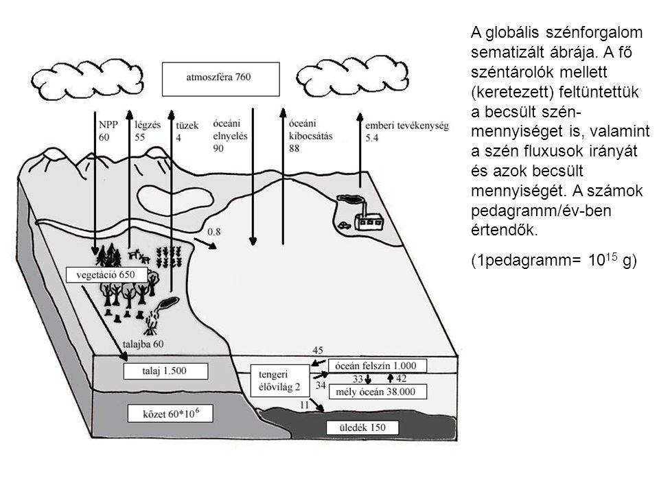 A globális szénforgalom sematizált ábrája