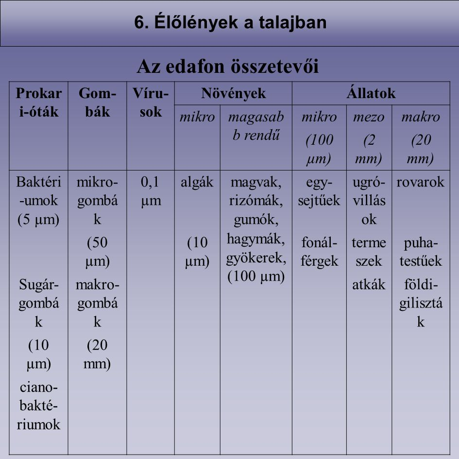 Az edafon összetevői 6. Élőlények a talajban Prokari-óták Gom-bák