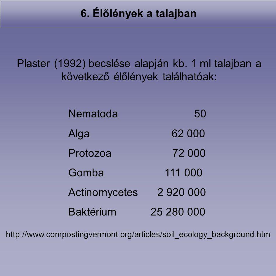 6. Élőlények a talajban Plaster (1992) becslése alapján kb. 1 ml talajban a következő élőlények találhatóak: