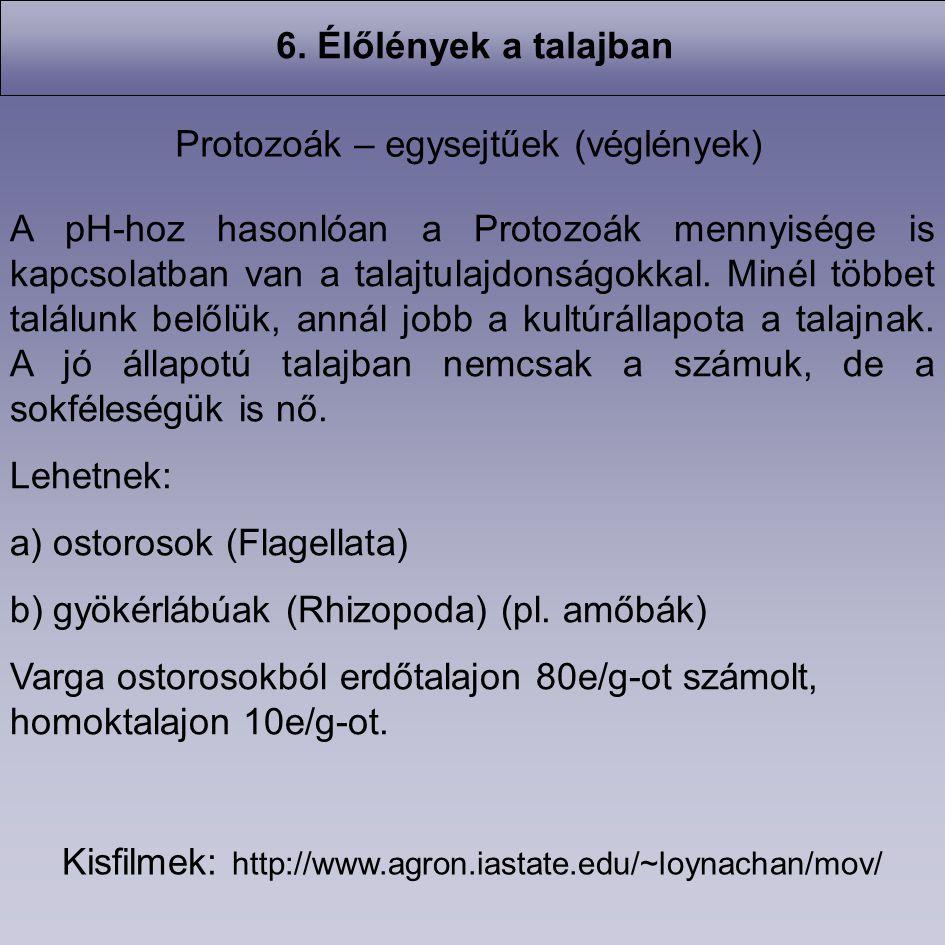 Protozoák – egysejtűek (véglények)