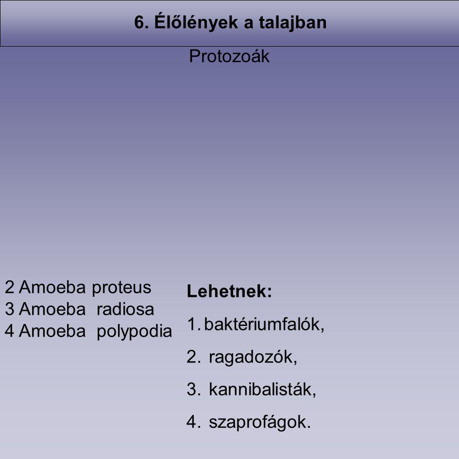6. Élőlények a talajban Protozoák. 2 Amoeba proteus. 3 Amoeba radiosa. 4 Amoeba polypodia. Lehetnek: