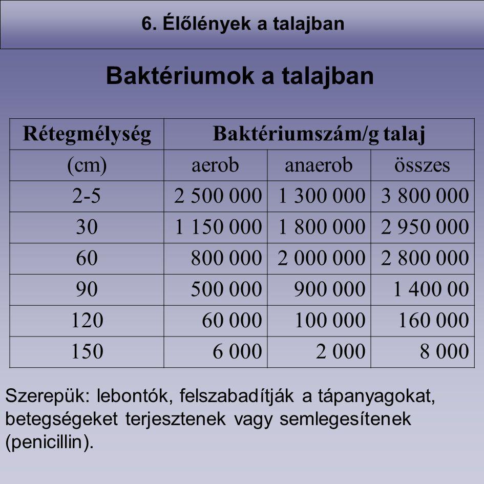 Baktériumok a talajban Baktériumszám/g talaj