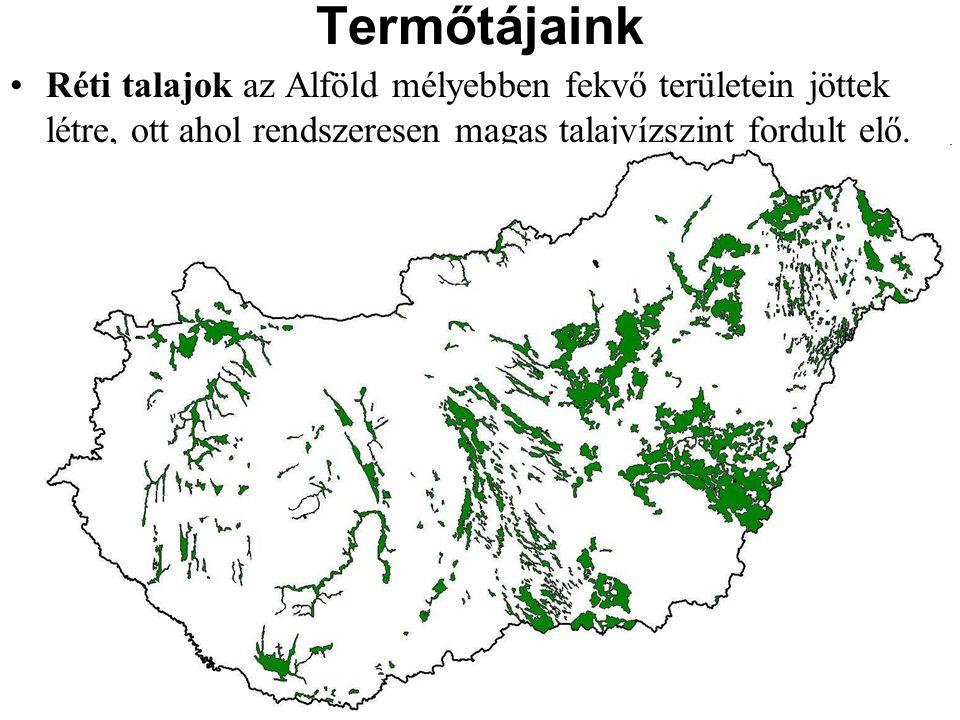 Termőtájaink Réti talajok az Alföld mélyebben fekvő területein jöttek létre, ott ahol rendszeresen magas talajvízszint fordult elő.