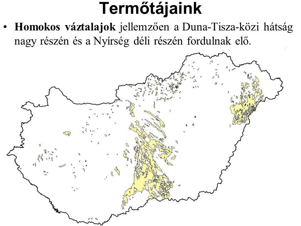 Termőtájaink Homokos váztalajok jellemzően a Duna-Tisza-közi hátság nagy részén és a Nyírség déli részén fordulnak elő.