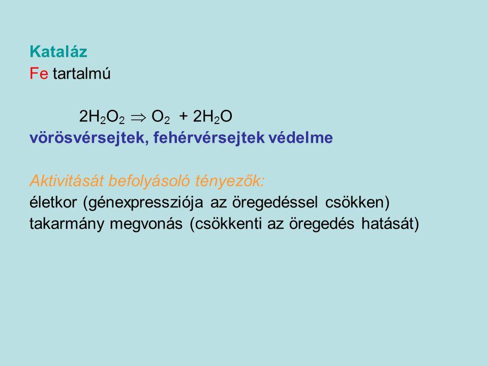 Kataláz Fe tartalmú. 2H2O2  O2 + 2H2O. vörösvérsejtek, fehérvérsejtek védelme. Aktivitását befolyásoló tényezők: