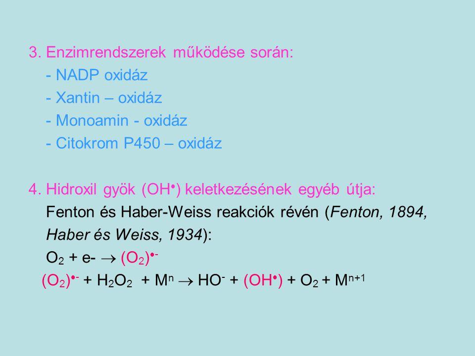 3. Enzimrendszerek működése során: