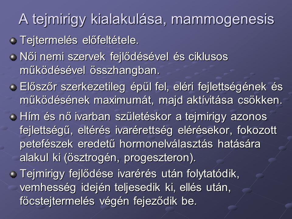 A tejmirigy kialakulása, mammogenesis