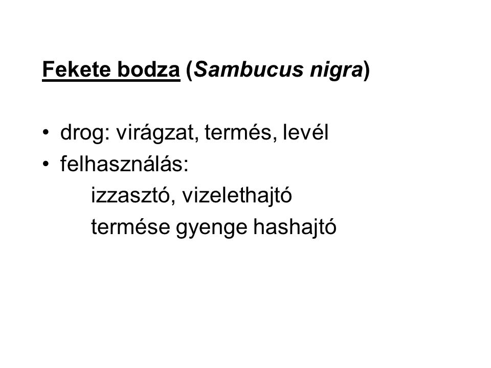 Fekete bodza (Sambucus nigra)