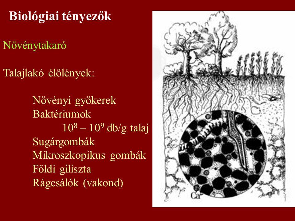 Biológiai tényezők Növénytakaró Talajlakó élőlények: Növényi gyökerek