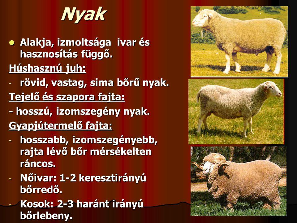 Nyak Alakja, izmoltsága ivar és hasznosítás függő. Húshasznú juh: