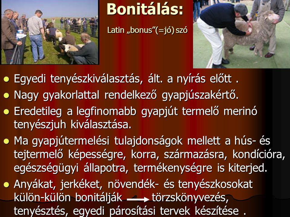 """Bonitálás: Latin """"bonus (=jó) szó"""