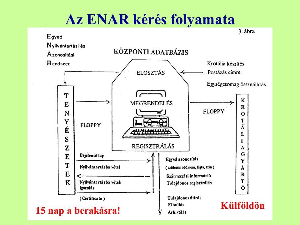 Az ENAR kérés folyamata