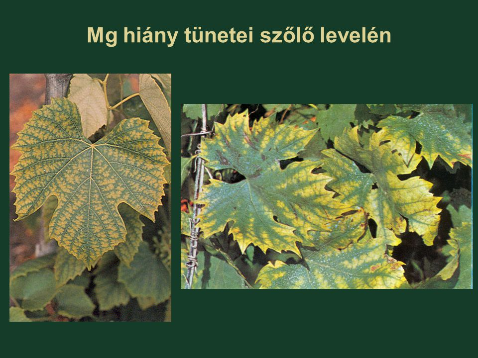 Mg hiány tünetei szőlő levelén