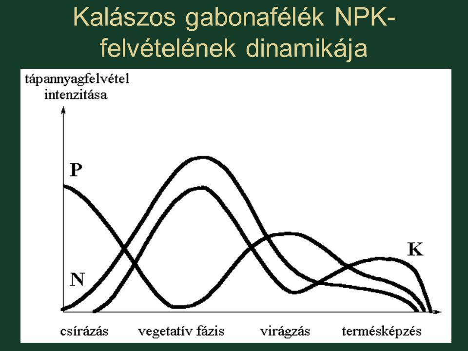 Kalászos gabonafélék NPK-felvételének dinamikája