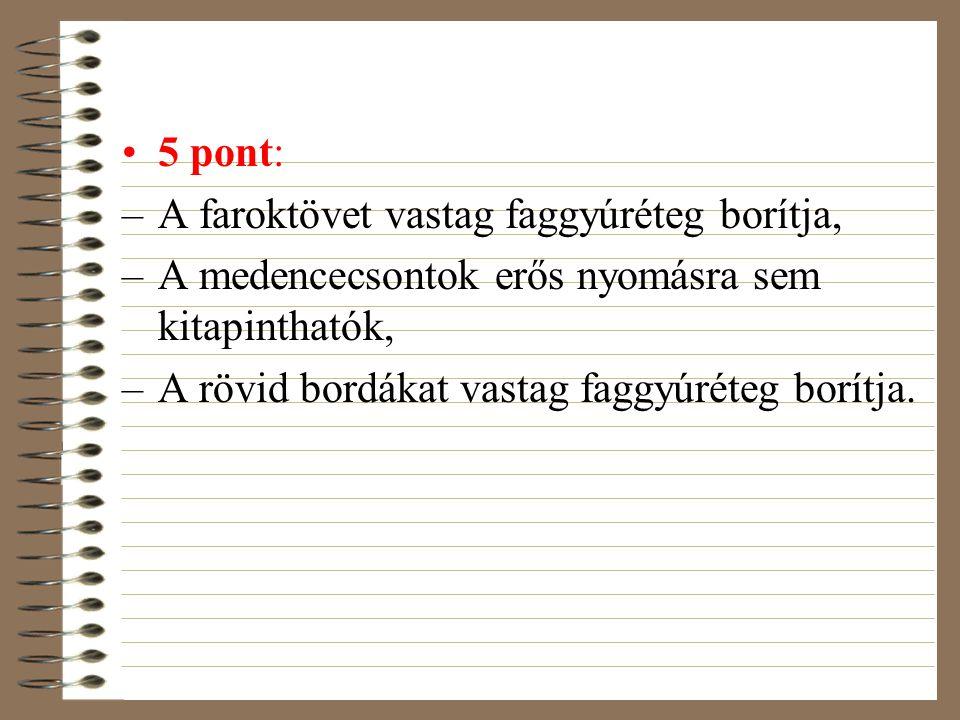 5 pont: A faroktövet vastag faggyúréteg borítja, A medencecsontok erős nyomásra sem kitapinthatók,